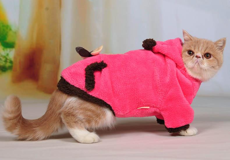 Одежда, которой кошки будут рады.